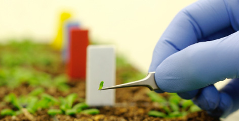 agricultural biotechnology china us